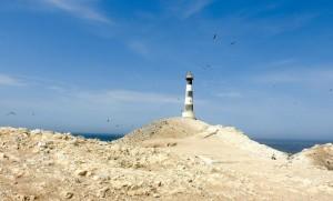 Descubre Punta Coles, la reserva de vida marina que acoge miles de lobos finos