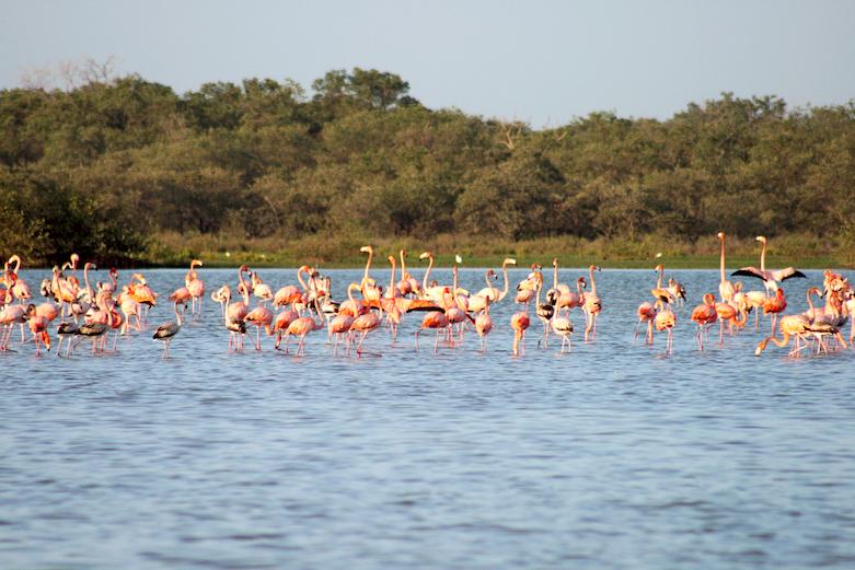 Foto: Santuario de Flora y Fauna Los Flamencos en La Guajira / ProColombia