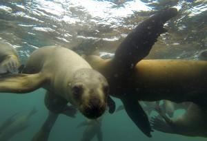 Sorteo de aniversario: ¡Vive una aventura con lobos marinos!
