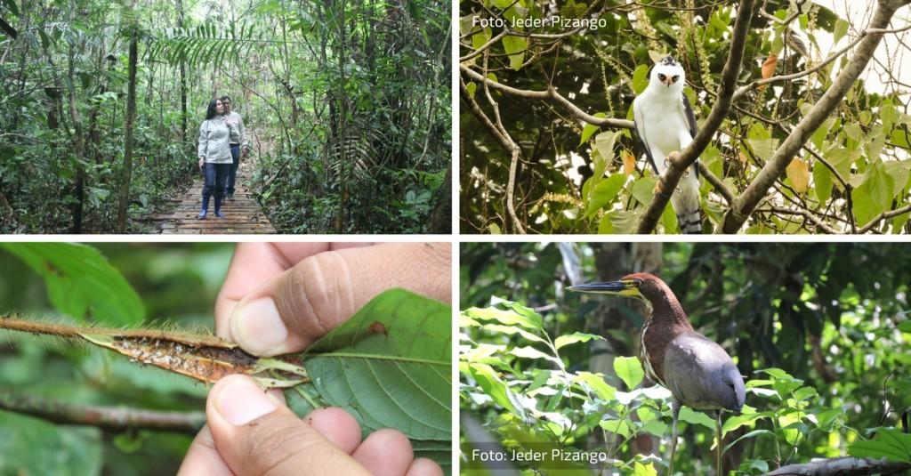 Fotos de aves: Jeder Pizango
