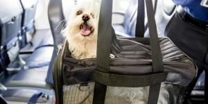 ¿Cómo viajar en avión con perros y gatos?