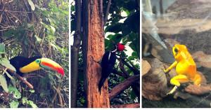 Descubre el lado ecológico de Bogotá en un fin de semana   VIDEO