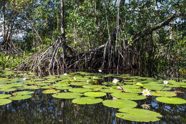 El nombre Río Dulce es compartido por dos lugares. El primero es un horrible y bullicioso pueblo Guatemalteco antiguamente conocido como Fronteras, situado al norte de un puente de casi un kilómetro de longitud. El segundo es un hermoso y apacible río (y el Parque Nacional establecido en sus inmediaciones) que recorre 43 kilómetros de selva y desfiladeros antes de desembocar en el Mar Caribe. Consideremos que el primero es un mal necesario para llegar al segundo. Relajarse un par de días en Río Dulce resultaba una buena apuesta...