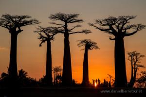 Postales de Madagascar