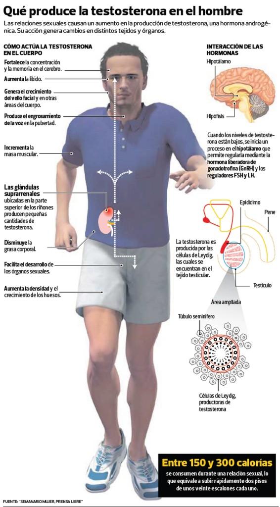 Infografía Testosterona GRANDE