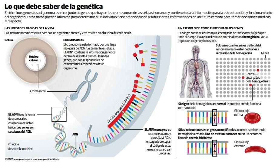 INFOGRAFIA Genética GRANDE