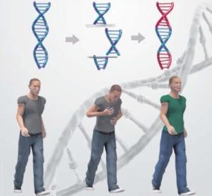 ¿Eliminar una enfermedad genética? Sí ¿Crear bebes a diseño? Todavía no