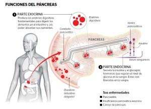 Los venenos y el páncreas