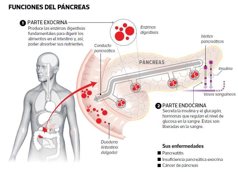 Los venenos y el páncreas | Blogs | El Comercio Perú
