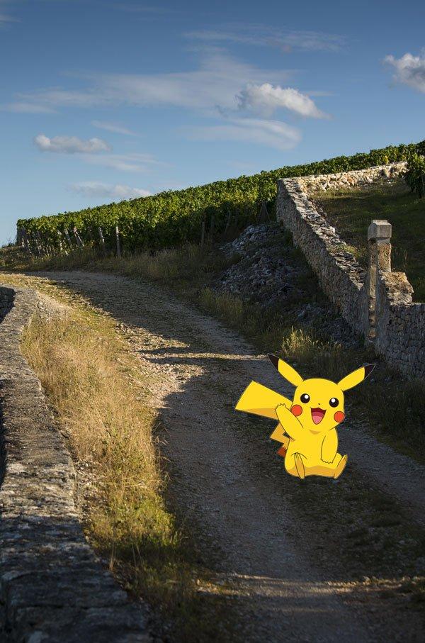 Pikachu en los viñedos