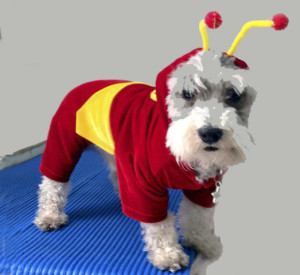Halloween: Todo lo que debes saber antes de celebrar con tu mascota