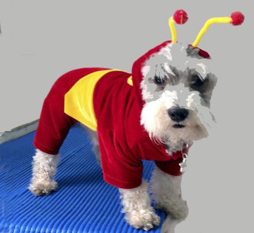 Disfraces, golosinas y diversión son ingredientes para que las personas celebren la Noche de Brujas. Cuidado con incluir a las mascotas en esta fiesta. Conoce por qué.