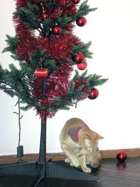 No solo se trata de que puedan romper los adornos del árbol o del Nacimiento, sino de que tu animalito juguetón podría exponerse a algún peligro -si por ejemplo- muerde las luces del árbol, que funcionan con electricidad.