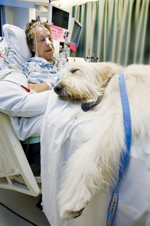 Uno de los últimos deseos de un joven paciente con cáncer terminal fue que su mascota lo acompañara. Su familia cumplió su voluntad, y ni bien el perro llegó a visitarlo, éste mostró algunos signos de mejora.