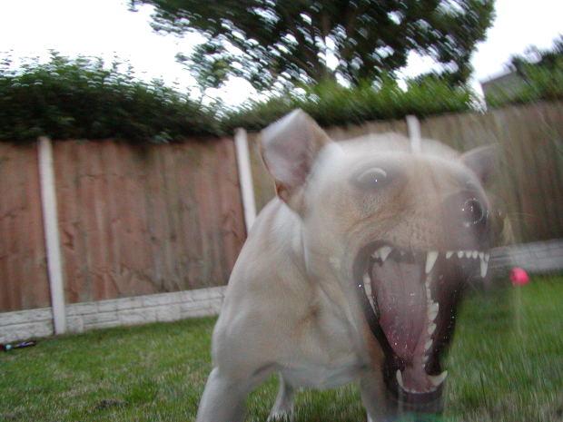 Un perro que muerde no es bueno. No puedes permitir que tu mascota te agreda a ti ni a ninguna otra persona. Si eso está sucediendo consigue un adiestrador, que es una persona entrenada para controlarlo.