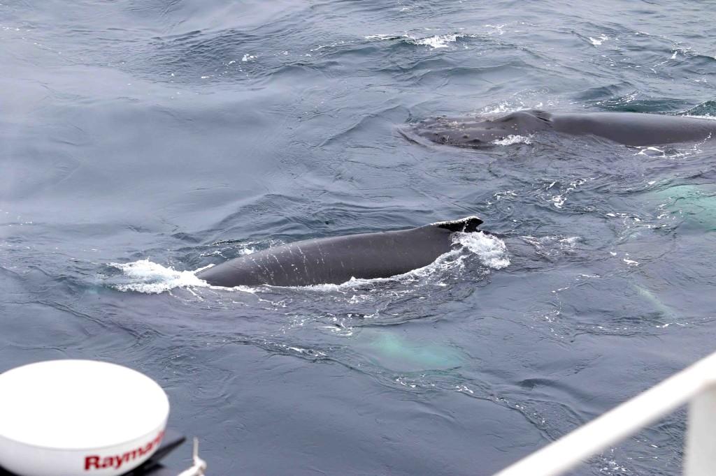 ballenas 10