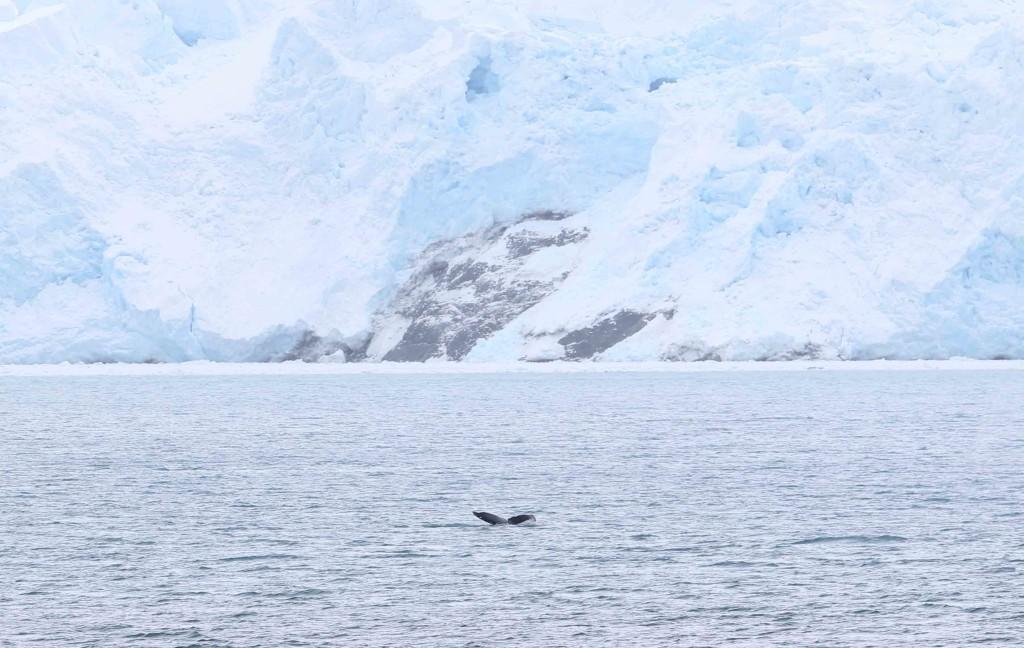 ballenas 11