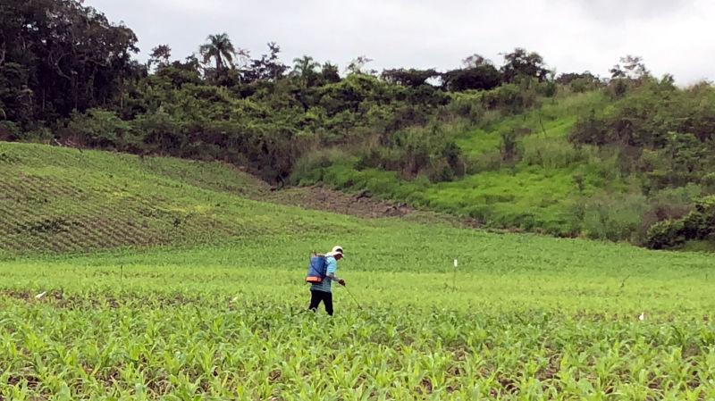 Un operario fumigando un campo de maìz en Bellavista (San Martín).