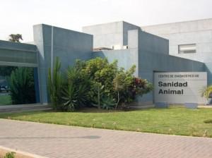 FOTO: PÁG. WEB SENASA SENASA. Dirección de Sanidad Animal, vela por la seguridad pecuaria; si se cumplen los requisitos, se podrá importar.
