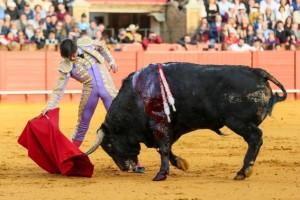 FOTO: SARA DE LA FUENTE - CULTORO Andrés Roca Rey hizo lo posible por torear con hondura al tercero (bis), pero el astado se rajó muy pronto; perdió la oreja por la espada.