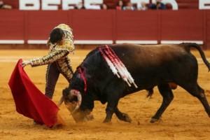 Andrés Roca Rey, con inteligencia y perspicacia, logró extraer la clase del toro de Núñez del Cuvillo.