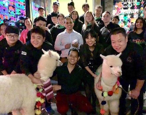 El equipo de PachaPapi, incluyendo las alpacas de visita.