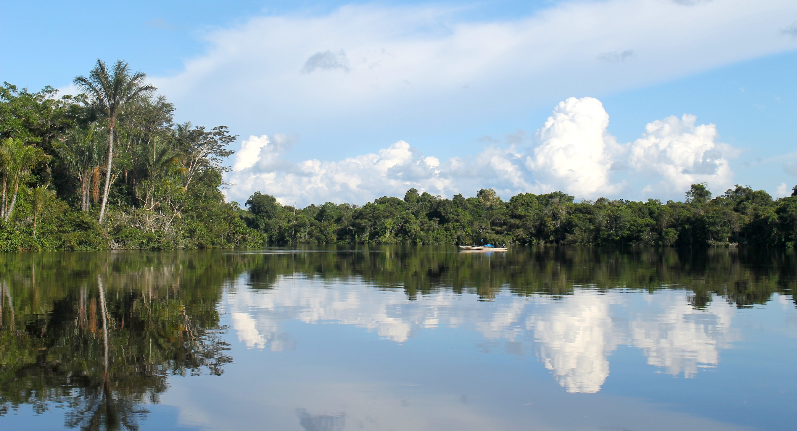 Viaja a la inexplorada Reserva Nacional Allpahuayo Mishana, en Iquitos (Parte I)