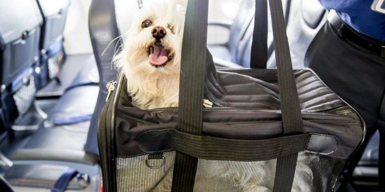 Infórmate sobre los requisitos, precios y consejos para volar con perros y gatos en la cabina del avión.