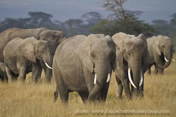 De safari en Kenia