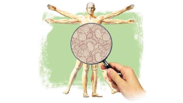 """Un reciente estudio, publicado el 11 de julio pasado en Frontiers in Genetics hace una revisión del papel que tendrían los retrovirus endógenos humanos (HERVs por sus siglas en inglés) en el desarrollo de una serie de enfermedades crónicas de causa desconocida, tales como esclerosis múltiple, esclerosis lateral amiotrófica (ELA), cáncer y esquizofrenia. La revisión de lo que son los HERVs, nos lleva al fascinante mundo del genoma, del """"DNA basura"""" y de los virus fósiles. Veamos."""