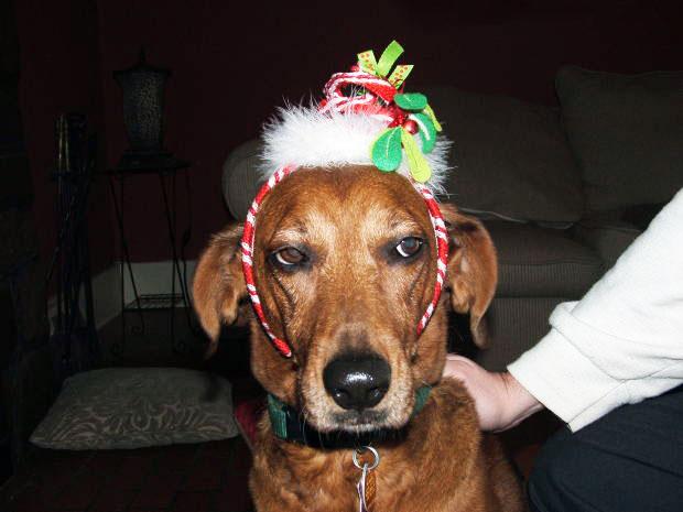 De regalo, mi hijo quiere un perrito