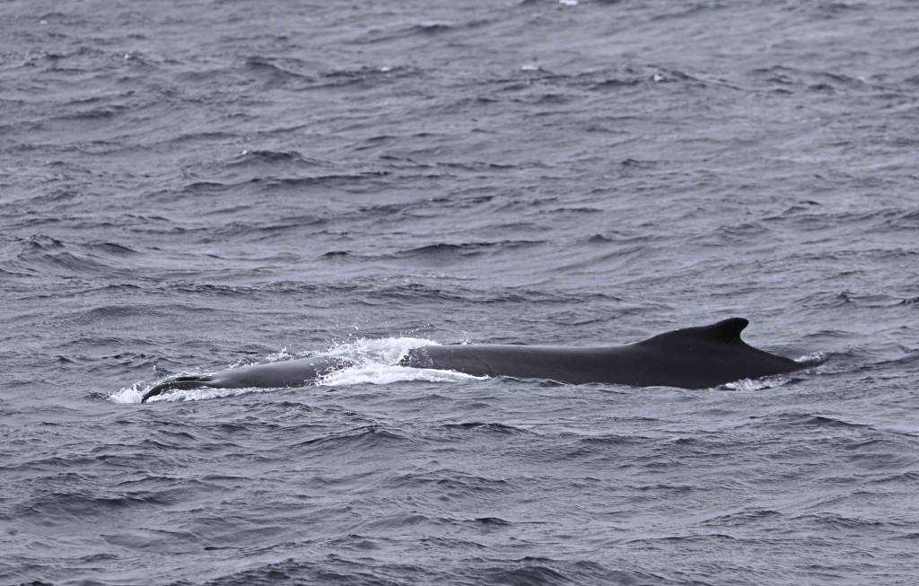 ballena 1