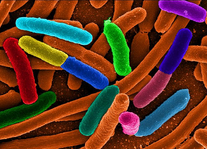 Bacteria salvada por proteína sintética