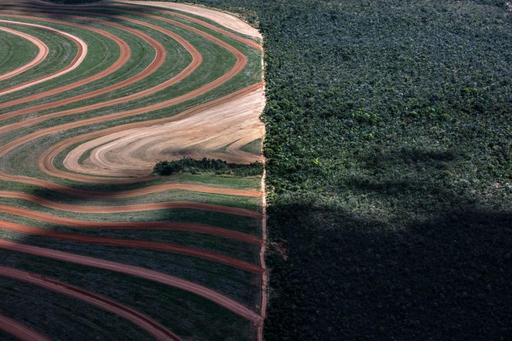 Campos de soya junto a bosques naturales en el Cerrado (Brasil). Foto: Marizilda Cruppe/Greenpeace