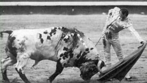 """FOTO: CULTORO Antonio Chenel 'Antoñete', el torero de los huesos frágiles por su desnutrición durante su infancia, con 'Atrevido', el """"toro blanco"""" de Osborne, en Madrid."""