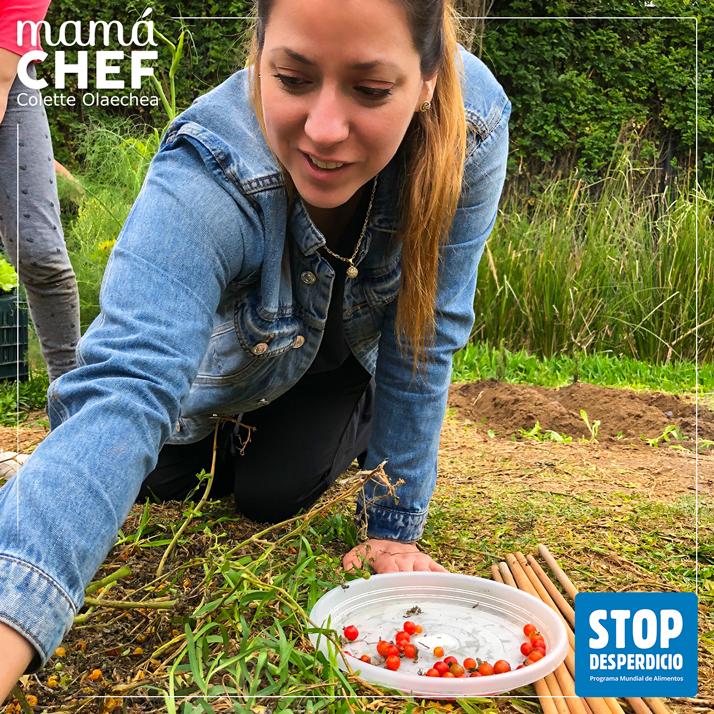 Mamá Chef Colette Olaechea colaborando con la campaña del WFP / PMA #STOP THE WASTE #STOPDESPERDICIO Colette cosechando tomates silvestres