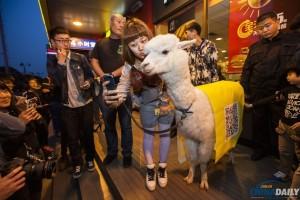 alpaca famosa