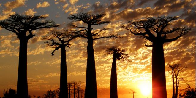 Madagascar de ensueño: Naturaleza pura