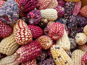 El maíz se domesticó de forma independiente en Sudamérica